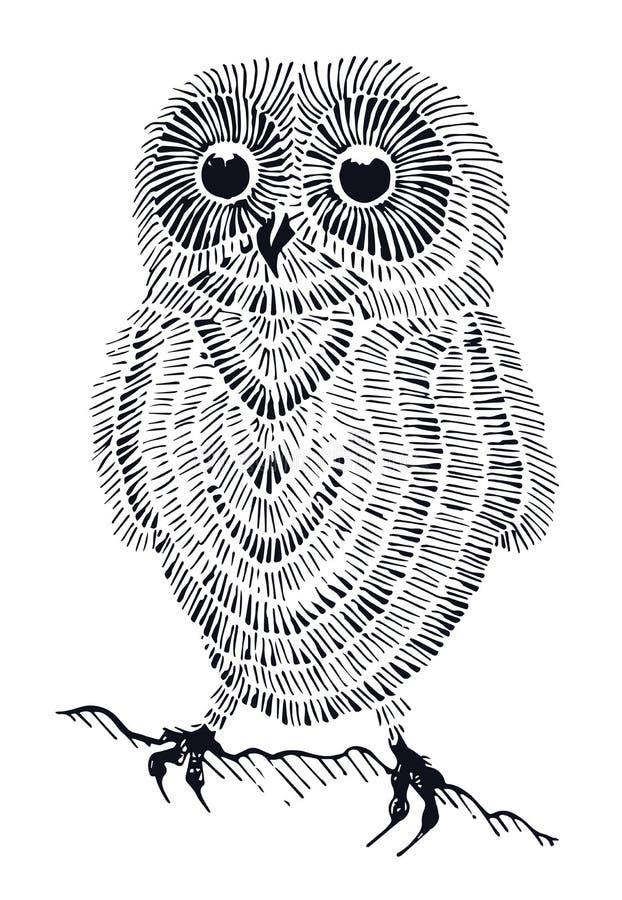 Милый owlet стоковое изображение