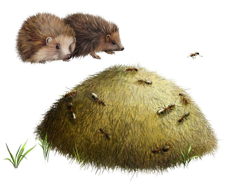 Anthill с муравеями. 2 ежа стоковое изображение