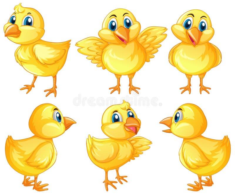 6 милых цыпленоков на белой предпосылке иллюстрация вектора