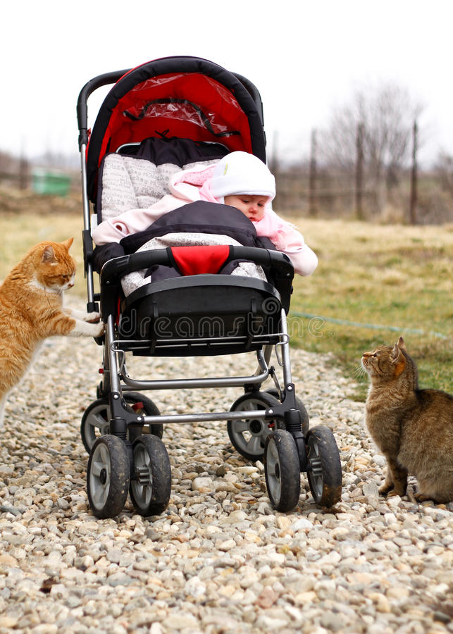 Младенец в pram и 2 котах стоковые фото