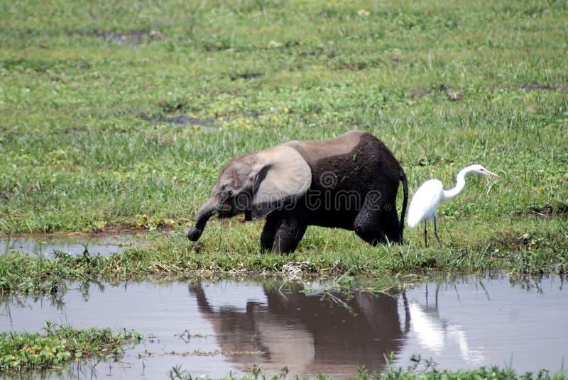 младенец есть слона стоковые изображения rf