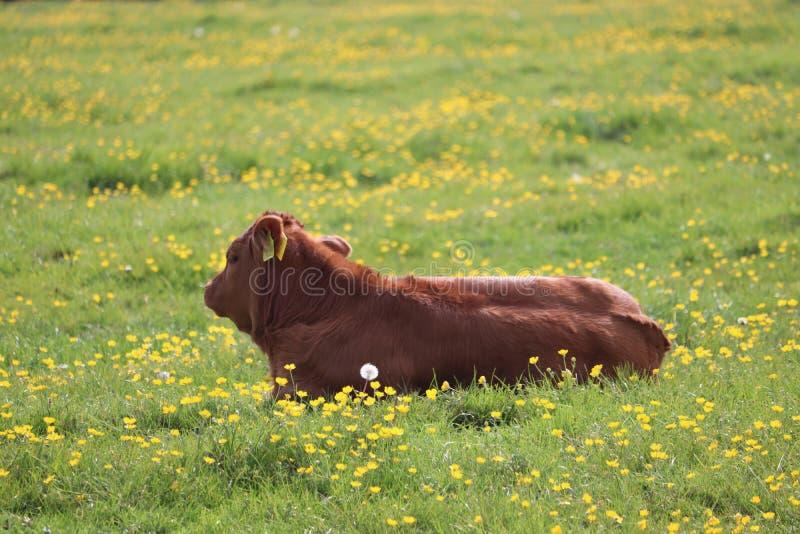 Младенец загорает икру кладя на траву стоковые фото