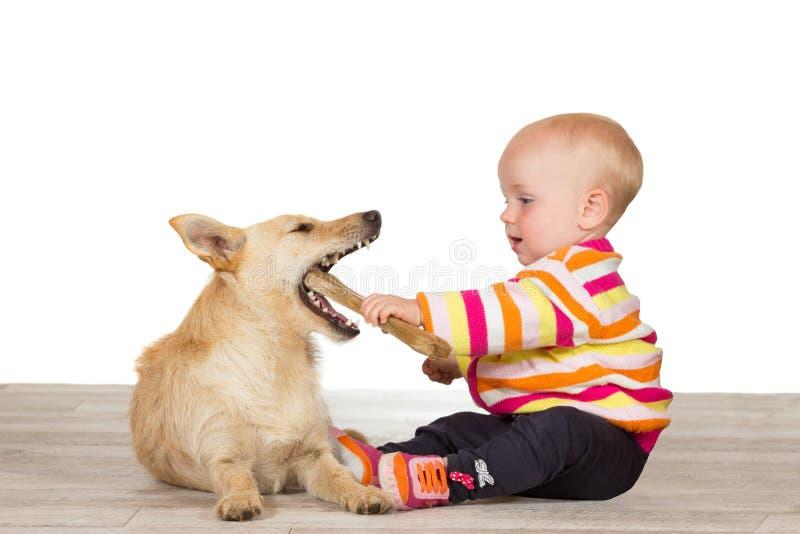 Младенец и terrier с chewy косточкой стоковая фотография