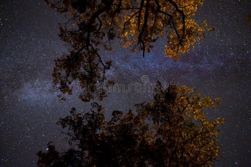 Млечный путь над кроной деревьев стоковая фотография rf
