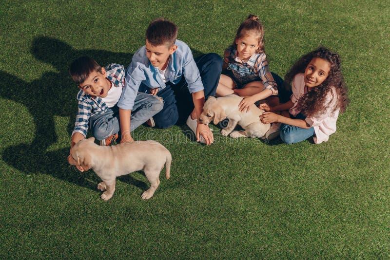 Многонациональная группа в составе дети играя с милыми щенятами labrador стоковое изображение rf