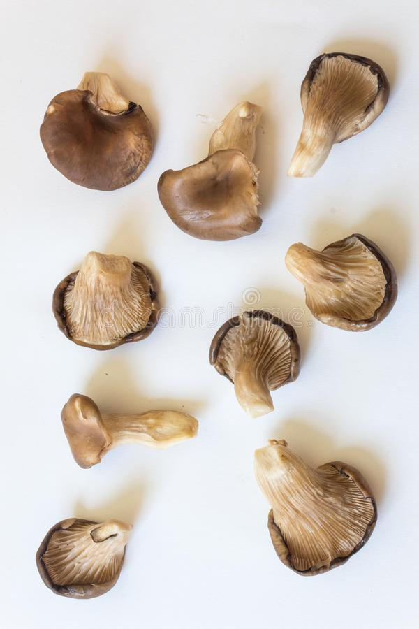 Многочисленные грибы устрицы ostreatus Pleurotus от много углов, изолированных на белизне стоковые изображения rf