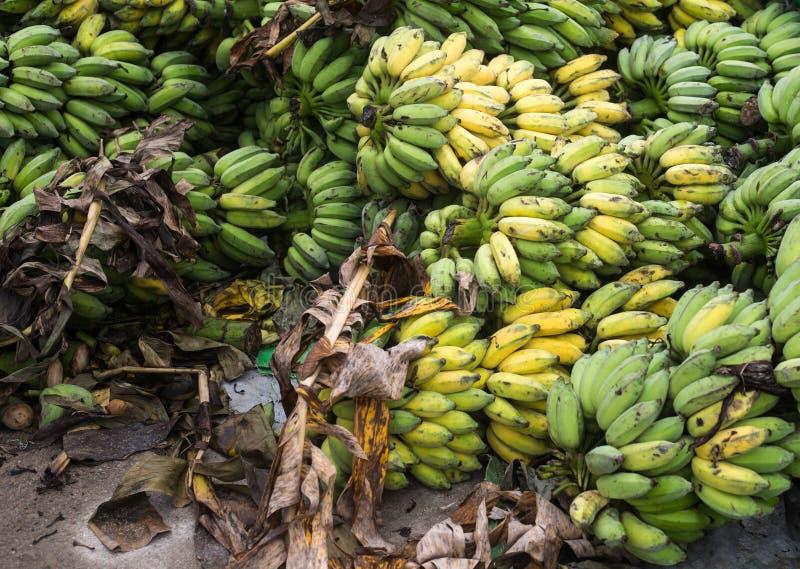 Много бананов плодоовощи которые содержат витамины И полезный к стоковая фотография rf