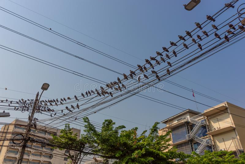 Много голубей в строке, голуби садить на насест на линиях электропередач стоковые фото