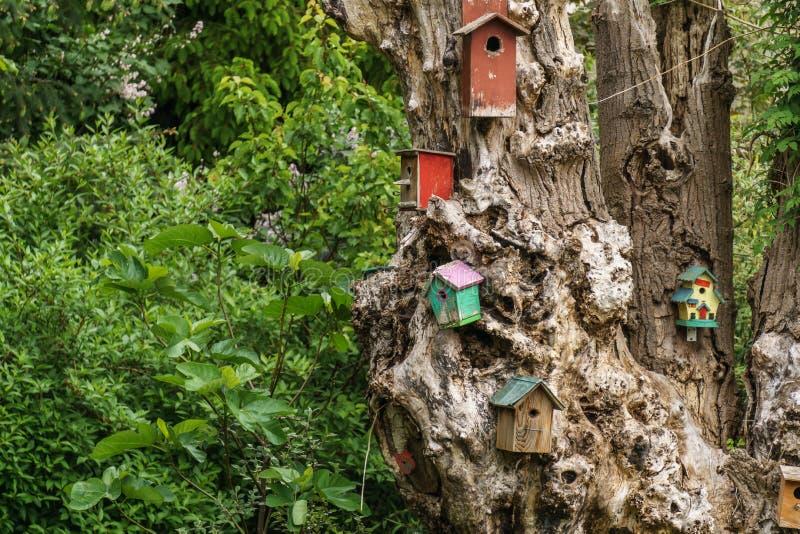 много деревянных birdhouses или коробка вложенности на дереве стоковые фотографии rf