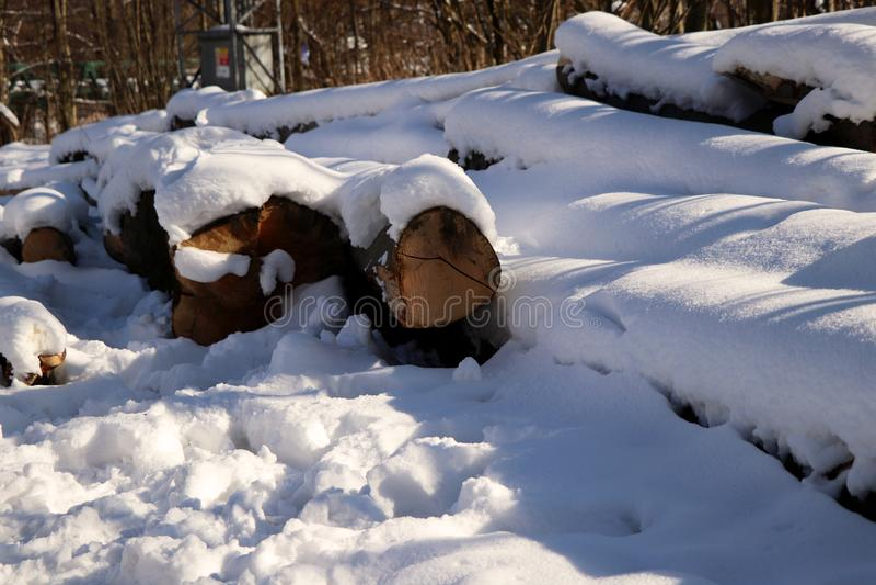 Много журналов древесины покрытых с снегом стоковое фото rf