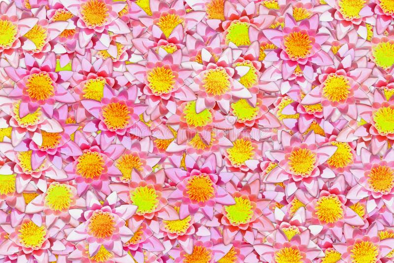 Много зацветать предпосылка розового и желтого конспекта цветка лотоса яркая стоковая фотография