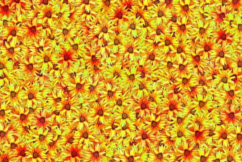 Много зацветая предпосылка желтого конспекта цветка gazania яркая стоковые фотографии rf