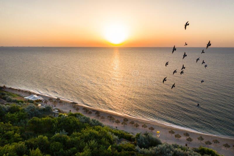 Много зонтиков соломы с шезлонгами на красивом песчаном пляже на восходе солнца Воздушная сторона пляжа взгляда сверху на солнечн стоковые фото