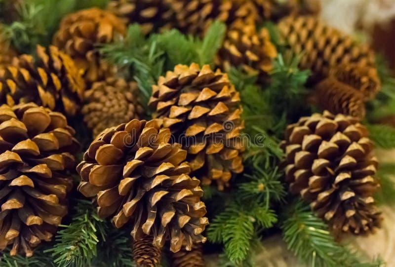 Много конусов рождественской елки коричневы с концом-вверх ветвей спруса, традиционное украшение лежать праздничного Нового Года стоковая фотография rf