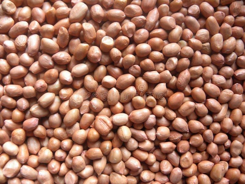 Много коричневых сухих сырцовых арахисов стоковые изображения