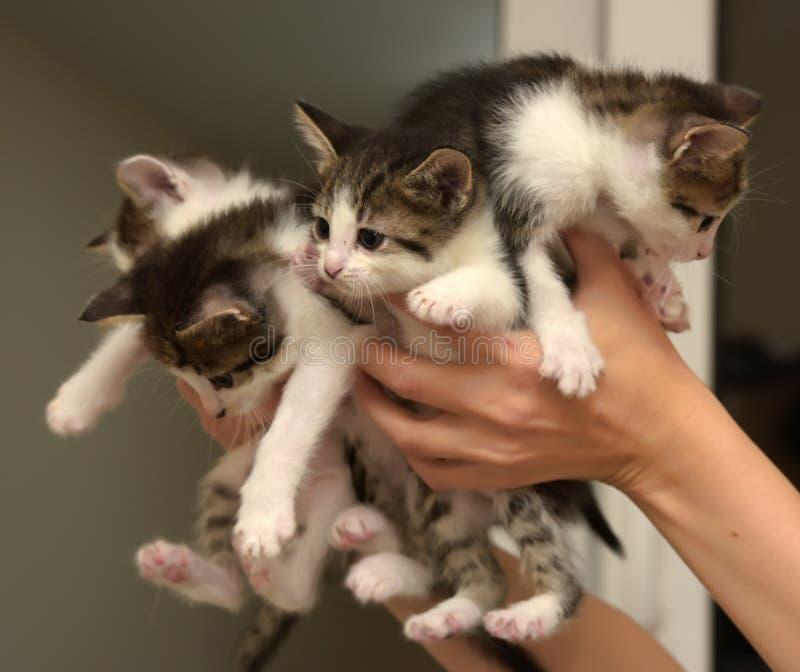Много котят стоковое фото rf
