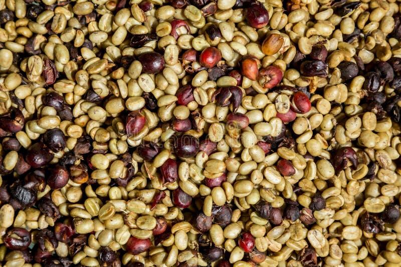 Много кофейных зерен сушат стоковое фото rf