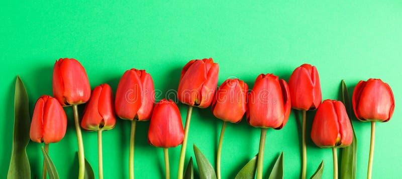 Много красивых красных тюльпанов с зелеными листьями на предпосылке цвета стоковое фото rf