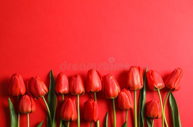 Много красивых красных тюльпанов с зелеными листьями на предпосылке цвета стоковое фото