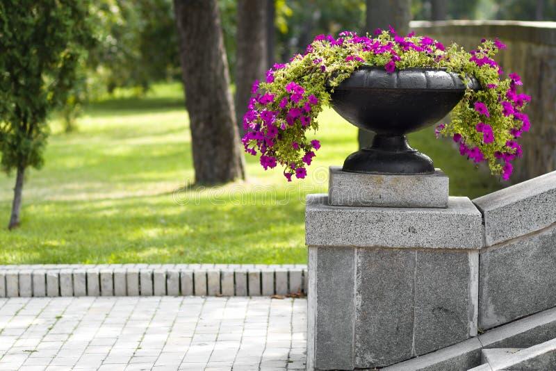 Много красивых растущих цветков и зацветать в большом каменном баке в парке на день лета солнечный Предпосылка зеленой травы и де стоковое фото