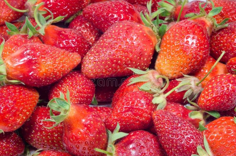 Много красных клубник Группа в составе самодельные зрелые клубники Вегетарианская еда от органического плода клубники Конец-вверх стоковая фотография