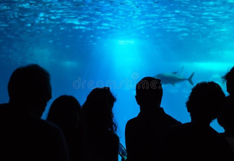 Много людей в oceanarium стоковые изображения