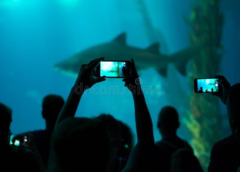 Много людей в oceanarium стоковая фотография rf