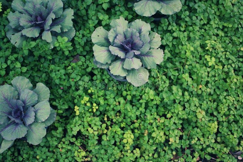 Много малых деревья или зеленых растений с конц-поднимают в дневном времени стоковая фотография