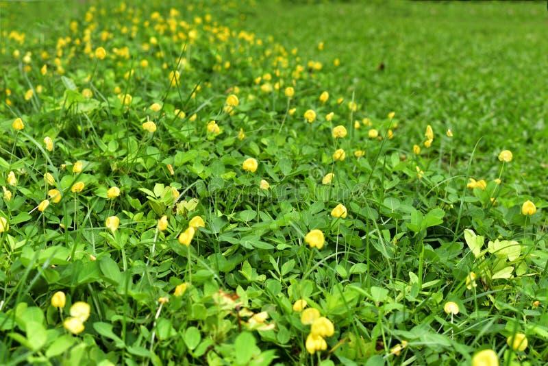 Много орхидей, экзотический вид, яркое beatyfull цветов стоковые изображения
