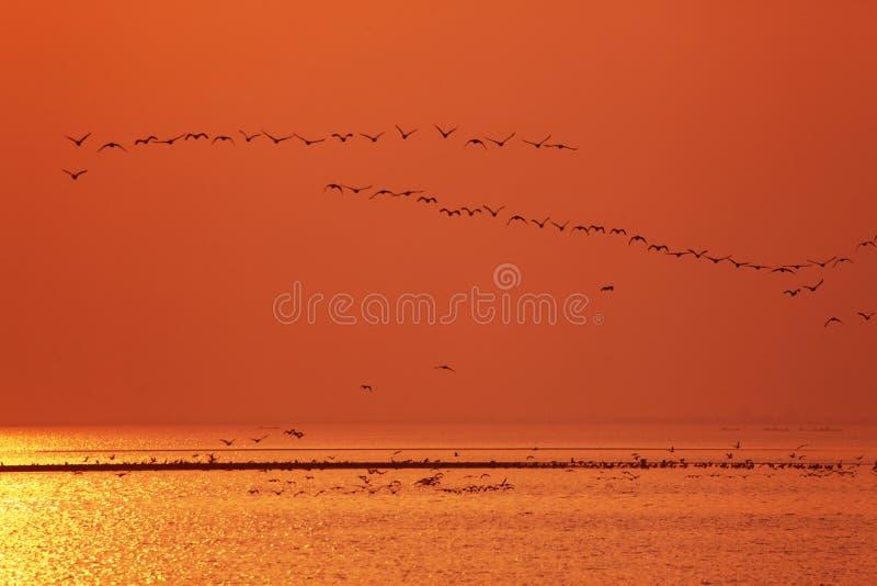Много птиц стоковое изображение
