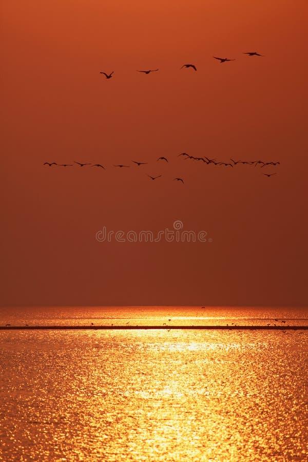 Много птиц стоковая фотография