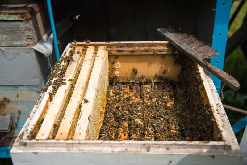 Много пчел в открытой крапивнице стоковое фото rf