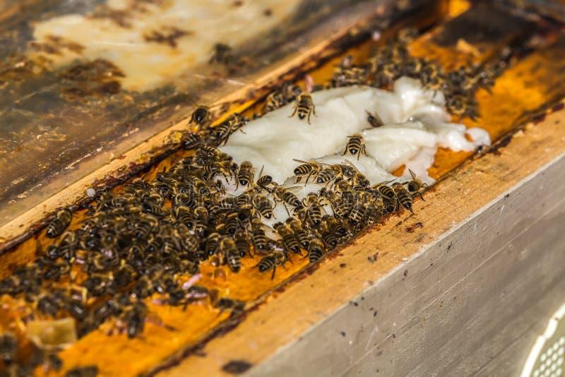 Много пчелы принимают сахарозу от beekeeper стоковые изображения rf