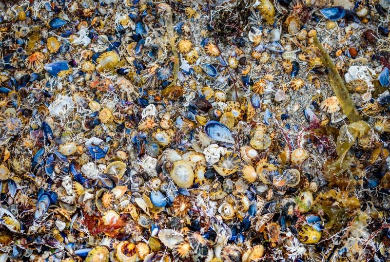 Много раковин моря на текстуре песчаного пляжа стоковые фото