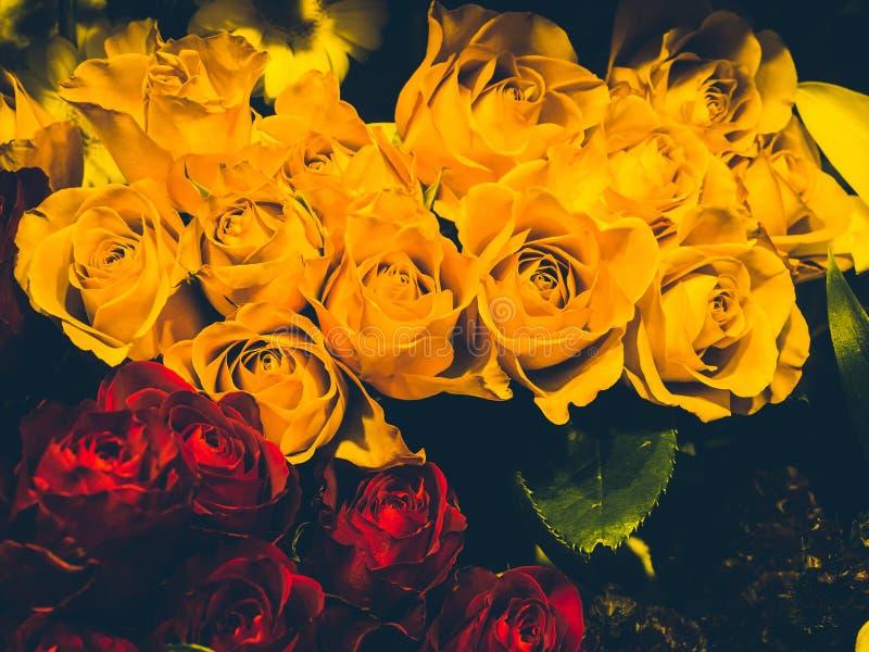 Много роз желтых и красных стоковая фотография rf
