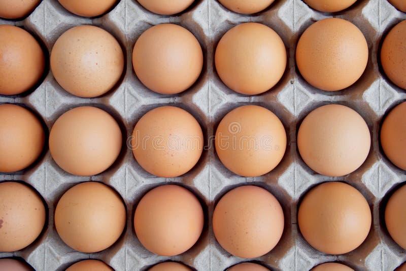 Много свежий сырцовый цыпленок яичка выровнянный вверх по в ряд Flatlay или взгляд сверху стоковое изображение rf