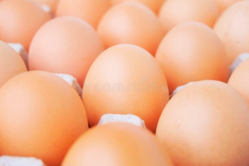 Много свежий сырцовый цыпленок яичка стоковая фотография rf
