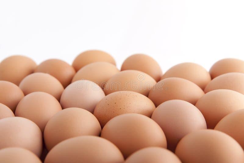 Много свежих коричневых яичек стоковые изображения rf