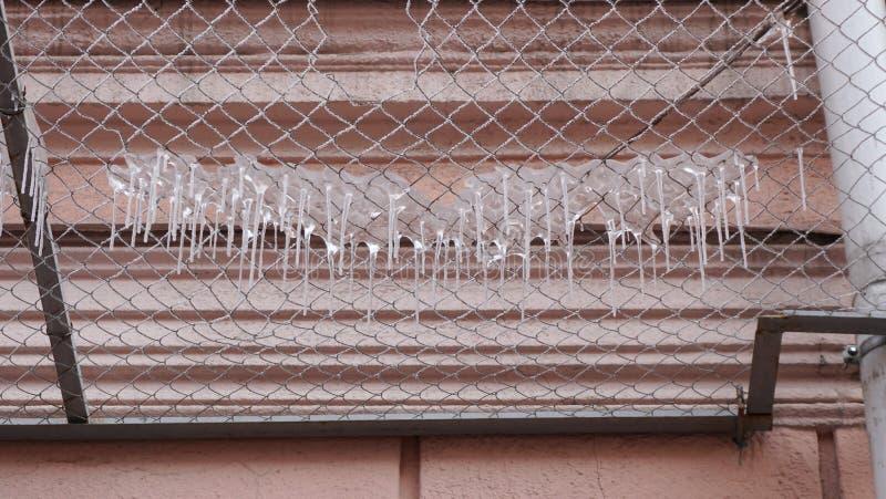 Много сосулек на решетке безопасности фасада здания стоковое изображение rf