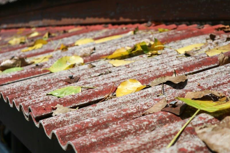 много сухих листьев падают на старую крышу, концепцию ослабляют, путешествуют в natur стоковые изображения rf