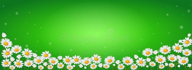 Много цветков стоцвета на зеленой предпосылке бесплатная иллюстрация