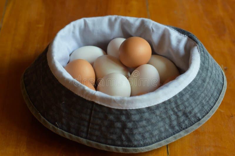 Много яичек помещены на поле стоковая фотография rf