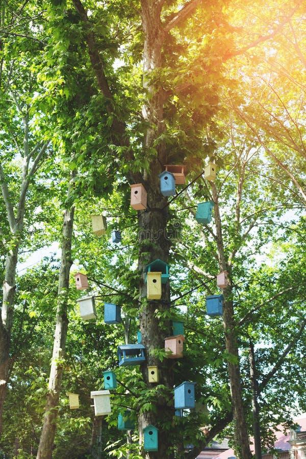 Много Birdhouses других цветов на дереве стоковое изображение rf