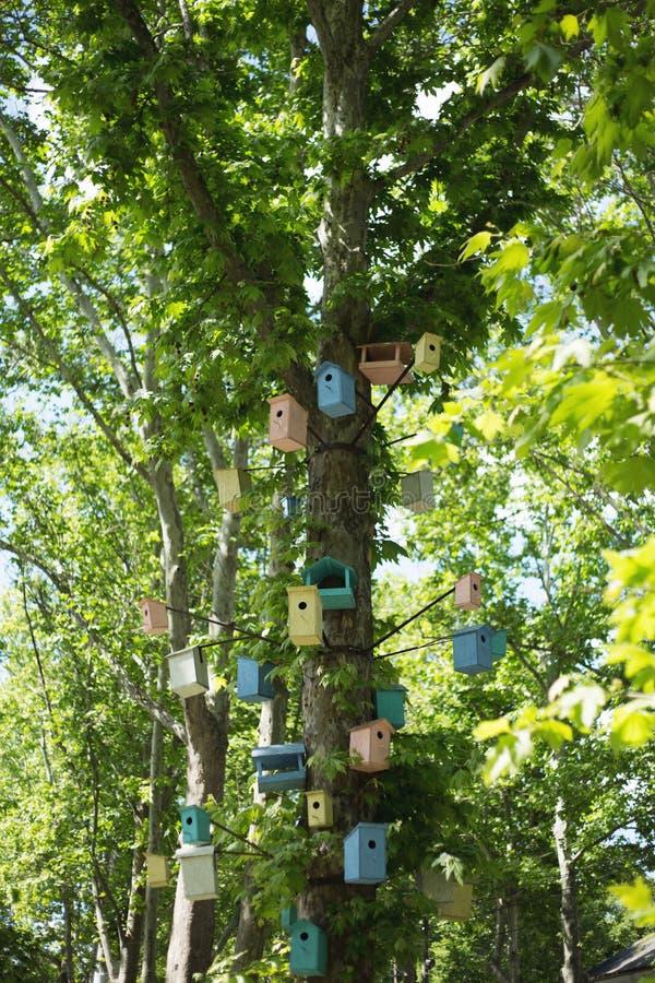 Много Birdhouses других цветов на дереве стоковая фотография