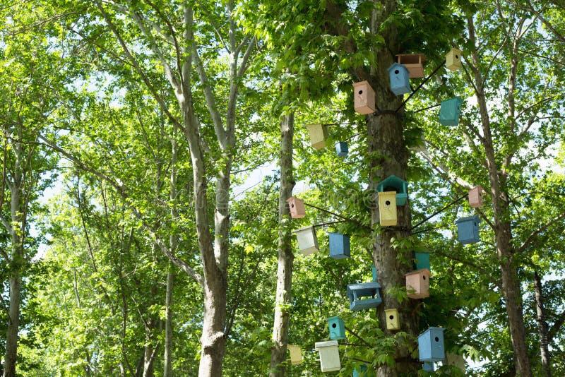 Много Birdhouses других цветов на дереве стоковая фотография rf