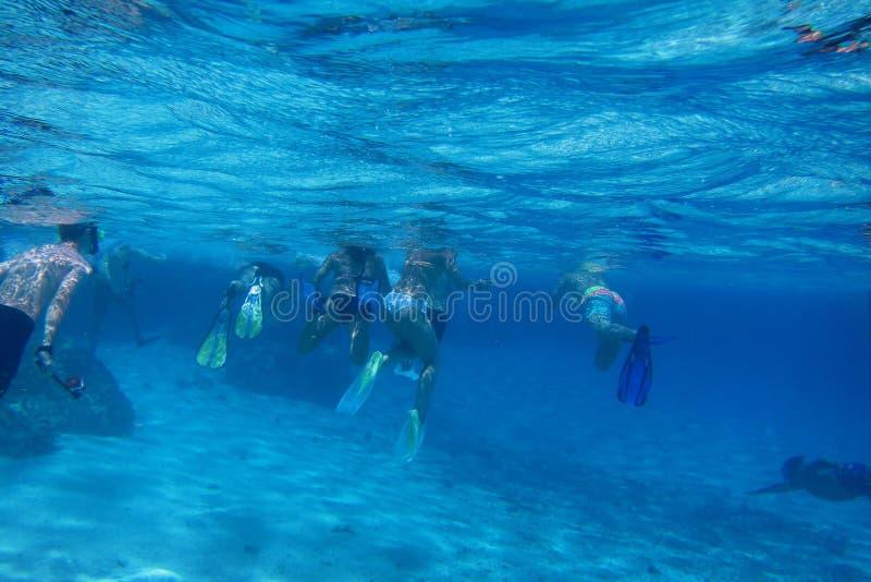 много snorkelers в голубой морской воде стоковое изображение rf