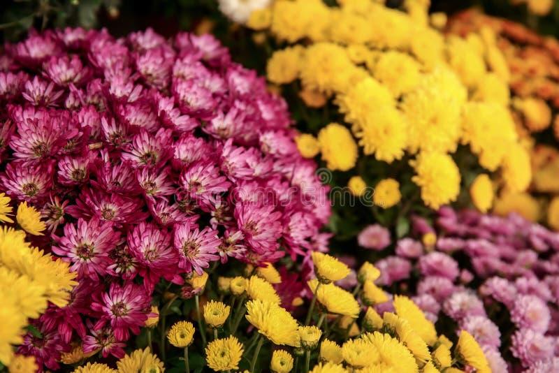 Множество красивых цветков стоковые фотографии rf