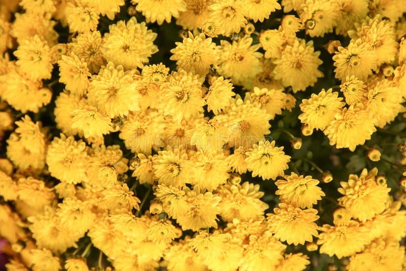 Множество красивых цветков стоковое изображение rf