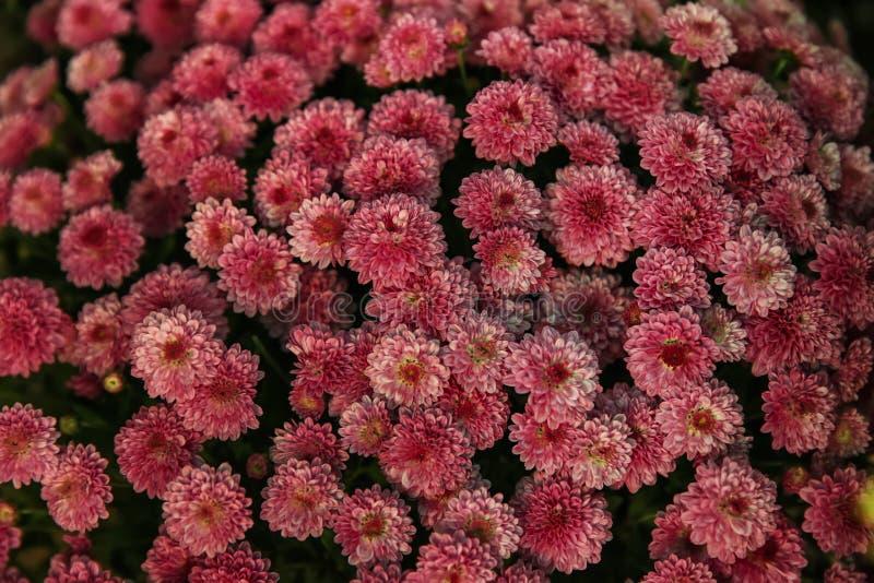 Множество красивых цветков стоковая фотография rf