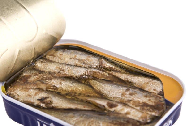 могут сардины стоковая фотография rf
